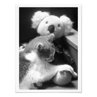 """""""Pelzfreunde"""" Katze u. Koala-Fotografie-Druck"""