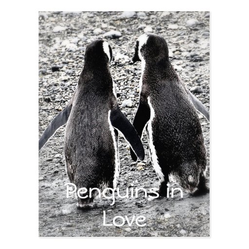 Penguins in der Liebe Postkarte