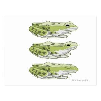 Perez-Frosch Postkarte