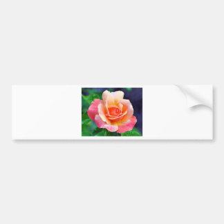 Perfekte Rose in der Blüte Autoaufkleber