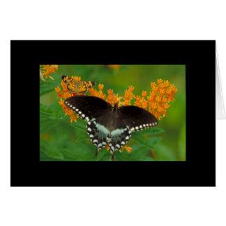 Perlen-Halbmond-Schmetterling Karte