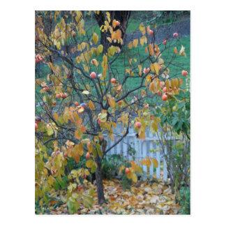 Persimone-Baum Postkarte