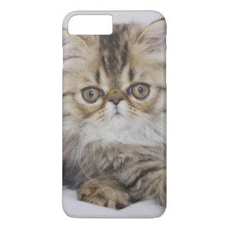 Persische Katze, Felis catus, BrownTabby, iPhone 8 Plus/7 Plus Hülle