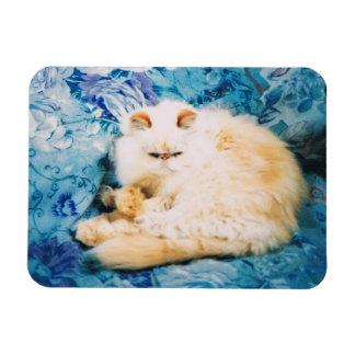 Persische Katzen-Foto-Magnet Magnet