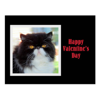 Persische Katzen-glücklicher Valentinstag Postkarte
