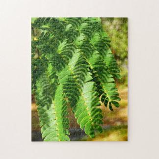 Persischer Silk Baum verlässt Foto zu verwirren Puzzle