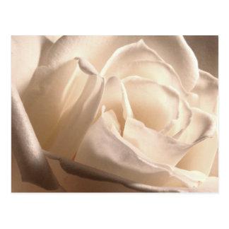 Personalisierte weiße Rose retten die Daten Postkarten
