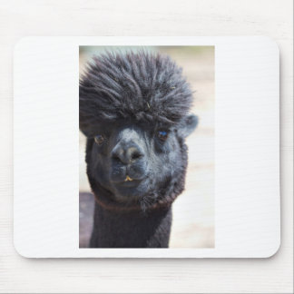 Peruanisches Alpaka mit dem verrückten Haar Mauspad