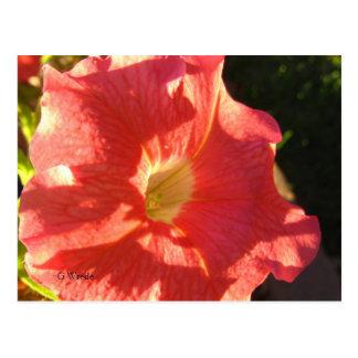 Petunie-Postkarte - mutiges korallenrotes Rot Postkarte
