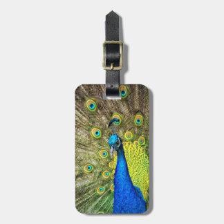 Pfau-Farbschönheit Gepäckanhänger