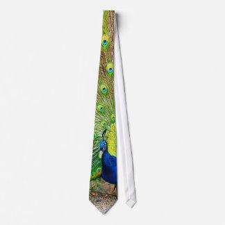 Pfau-Krawatte Krawatte