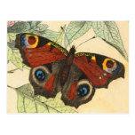 Pfau-Schmetterling Postkarte