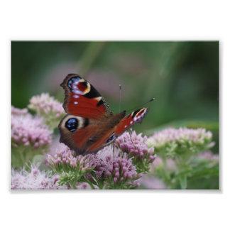 Pfau-Schmetterlings-Foto-Papier Fotodruck