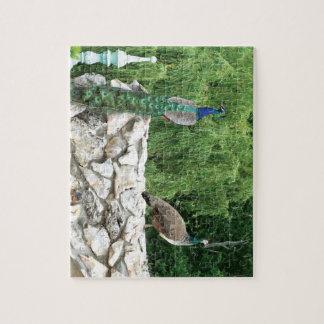Pfau-Vogel-Garten-Foto-Puzzlespiel mit Puzzle