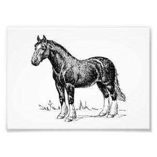 Pferd 1 kunstfoto