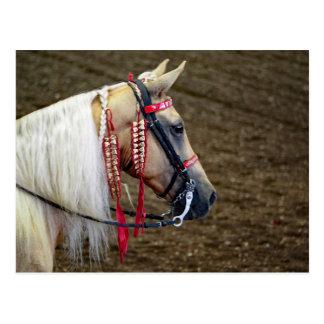Pferd 658 postkarte