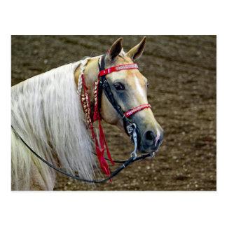 Pferd 662 postkarte