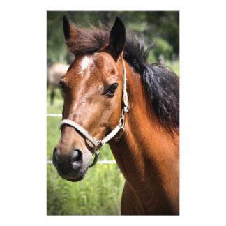 Pferd 8674 briefpapier