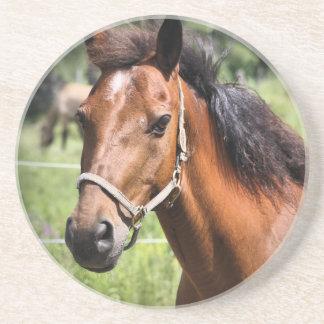 Pferd 8674 sandstein untersetzer