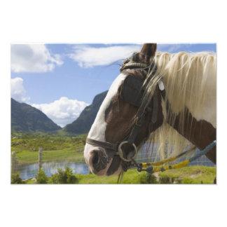 Pferd, Abstand von Dunloe, Landkreis Kerry, Irland Kunstphoto