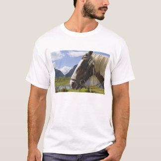 Pferd, Abstand von Dunloe, Landkreis Kerry, Irland T-Shirt
