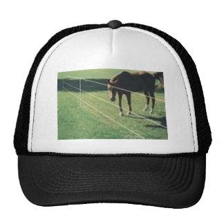 Pferd am Zaun Truckercap