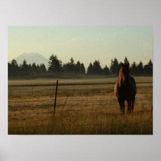 Pferd an der Dämmerung Poster