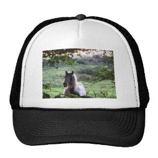 Pferd an einem Zaun Kultmütze