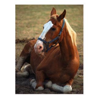 Pferd, das auf Gras, Nahaufnahme stillsteht Postkarten