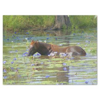 Pferd, das im See, Australien, Foto isst Seidenpapier