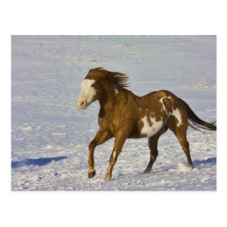 Pferd, das in Schnee läuft Postkarte