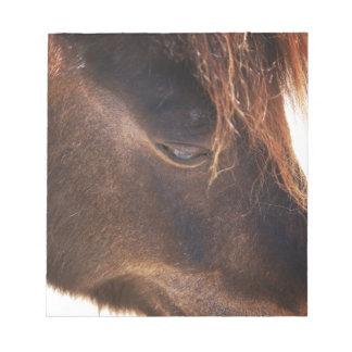 Pferd, das unten schaut notizblock