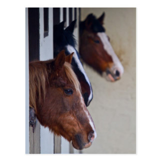 Pferd drei in der Stall-Postkarte Postkarte