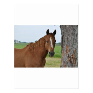 Pferd durch Baum Postkarte