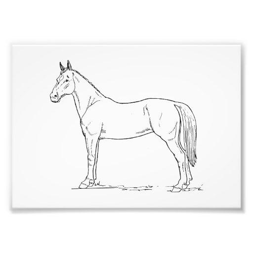 Pferd Foto Drucke