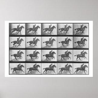 Pferd galoppierend, überziehen Sie 628 'von der Ti Poster