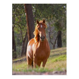 Pferd im Holz Postkarte