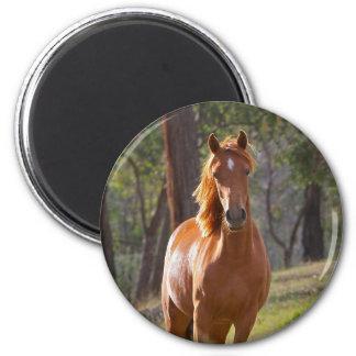 Pferd im Holz Runder Magnet 5,1 Cm