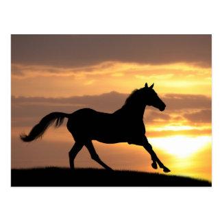 Pferd im Sonnenuntergang Postkarte