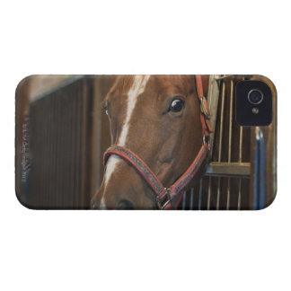 Pferd im Stall iPhone 4 Case-Mate Hüllen