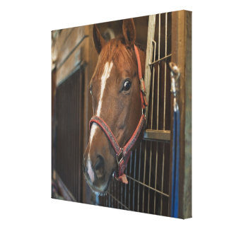 Pferd im Stall Leinwand Druck
