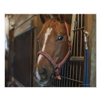 Pferd im Stall Poster