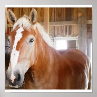 Pferd im Stall Posterdrucke