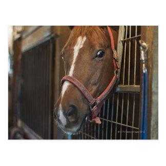 Pferd im Stall Postkarte