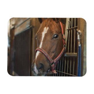 Pferd im Stall Vinyl Magnet