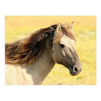 Pferd im wilden postkarten