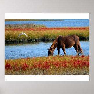 Pferd in den Sümpfen postieren Poster