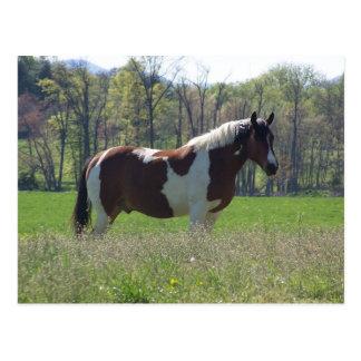 Pferd in der Wildblumen-Postkarte Postkarte