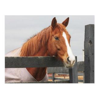 Pferd in einer Decke an der Zaun-Ecke Postkarte