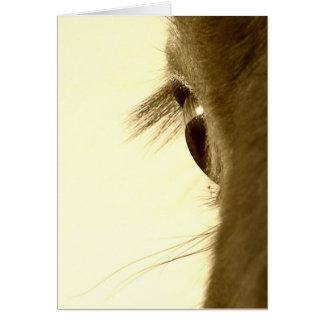 Pferd Karte